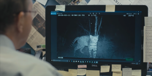 Google's AI can identify wildlife from trap-camera footage with up to 98.6% accuracy