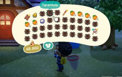 Animal Crossing: New Horizons: How To Make A Spider Island (And Get Super Rich)