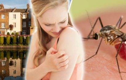 9 Effective Solutions to Get Away from Mosquitoes at Your Home – 2020 Guide