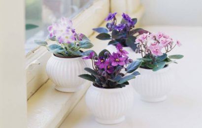 5 Best Tropical Flowering Plants You Can Grow Indoors